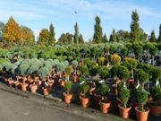 Растения для ландшафтного дизайна. Самая низкая цена. Доставка.