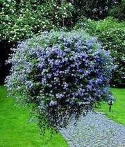 подвесное кашпо с цветами