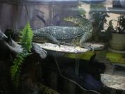 Рептилии купить в питере