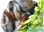 Мидия тихоокеанская живая Mytilus trossulus