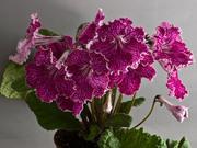 Красивоцветущие растения(детки)
