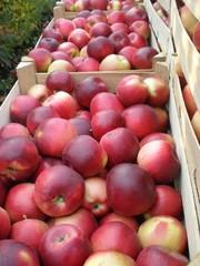 Предлагаем сладкий,  качественный виноград,  яблоки,  слива