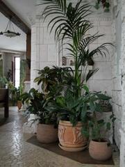 Комнатное озеленение и уход за зимними садами