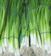 Зеленый лук. Ежедневные поставки