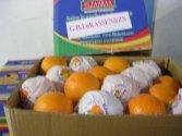 Апельсины,  лимоны ,  клементины из Египта отп от производителей