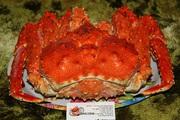 Краб королевский камчатский, опилио, синий, ангулятус, живой, варено мороженный, целый, разделка .Доставка по РФ, Казахстану, Беларуссии.