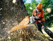 Удаление аварийных деревьев частями и с оттяжкой