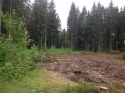 Торопитесь! Выгодное приобретение – 13 соток ИЖС с личным лесом!