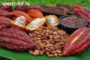 Какао Бобы,  Порошок,  Масло оптом. Прямые поставки.