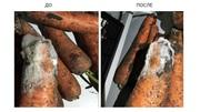Сделай озонирование овощехранилища - сохрани урожай!