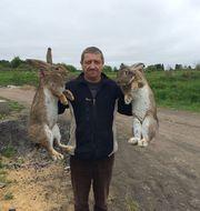 Продаю кроликов Немецкий Ризен.Самцы возраст от 45 суток