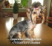Любые стрижки собак и кошек,  выезд мастера на дом по Санкт-Петербургу.