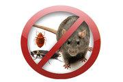 Качественно и быстро устраним клопов,  тараканов и крыс