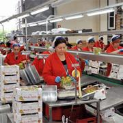 Рабочие на пищевое производство