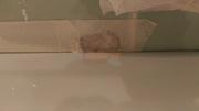 Реставрация и ремонт чугунных стальных и акриловых ванн