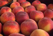 Персики из Испании оптом