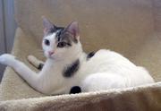 Обалденные кошка и кот Ася и Маркус ищут семью