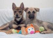Обалденные щеночки в поисках дома и любящих рук