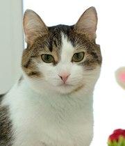 Кошка с человеческими глазами ищет дом