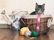 Воспитанй кот аристократ Вася ищет семью