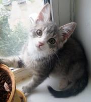 Два очаровательных котенка ищут дом