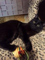 Молодой черный котик ищет дом