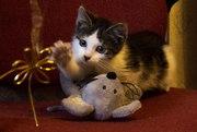 Ласковый котенок ищет любящий дом
