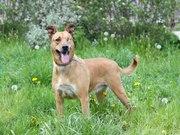 Элис удивительная собака с яркой вншностью ищет дом