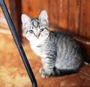 Обалденные котята в поисках дома