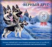 Восточноевропейская овчарка,  щенки