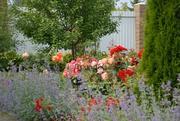 Авторское озеленение Вашего сада от студии ДриадаС