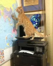 Передержка котов гостиница для животных