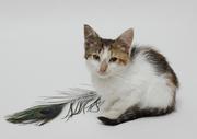 Ласковый котенок в дар
