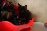 Отдается замечательная девочка, котенок.