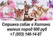 Стрижка собак в Колпино